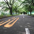 木の通り道